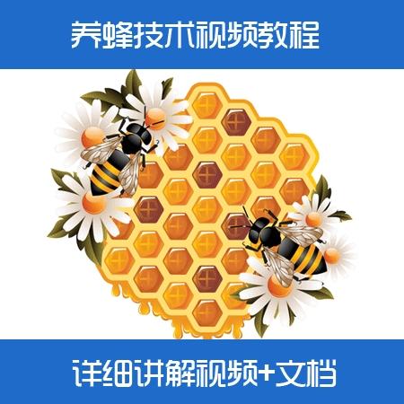蜜蜂养殖技术视频教程/中蜂养殖/养蜂技术大全视频教材/如何养蜂
